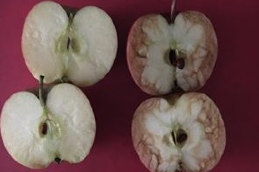 Ova je učiteljica iskoristila jabuke kako bi ukazala na strahote vršnjačkog zlostavljanja